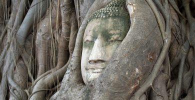 Árbol Bodhi