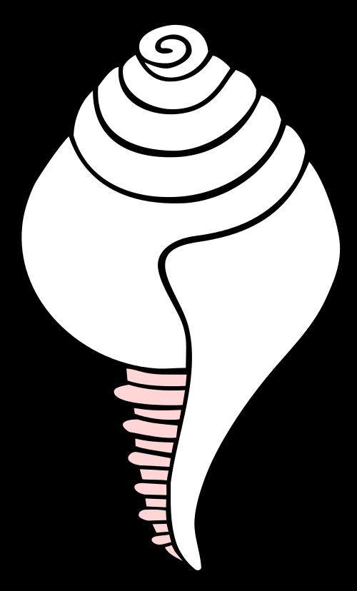 Símbolo Concha Blanca
